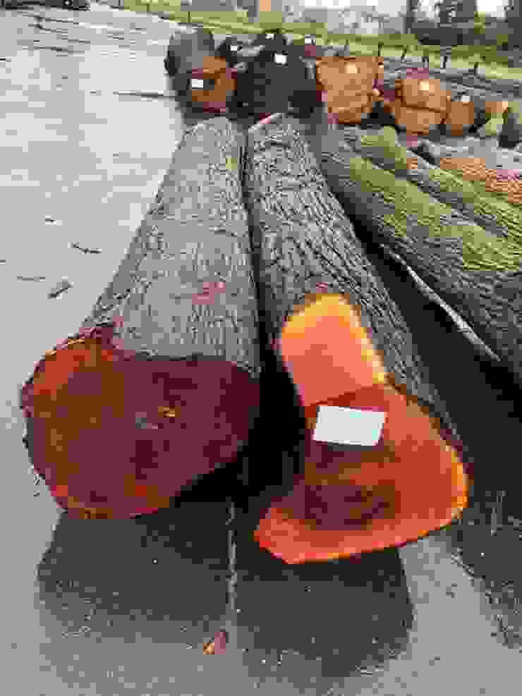 日本櫸木拼板 根據 製材所 Woodfactorytc