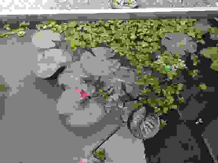Tropical home 2 Studio Nirvana Tropical style garden