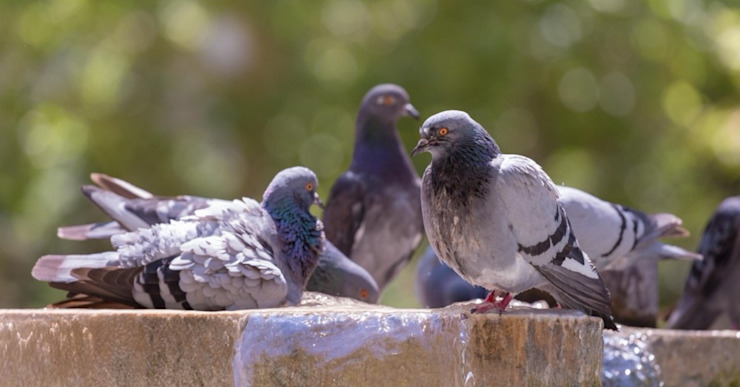 Cost-effective Bird Control Pest Managers Cape Town