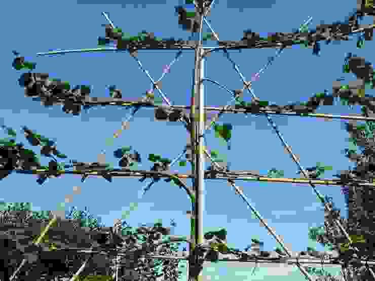 Leibomen voor meer prive in de tuin van onlinegroen
