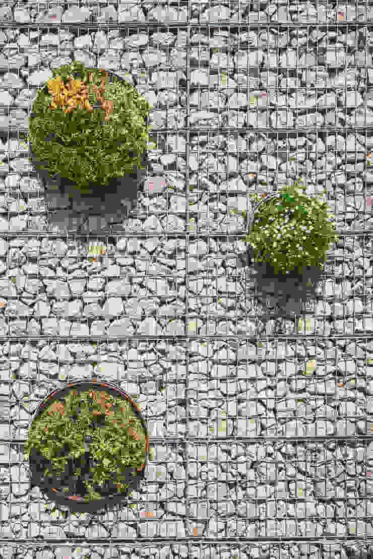 CASA FORBES Miel Arquitectos Modern style gardens
