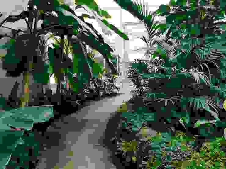 Jardines en la fachada de estilo  por Tukang Taman Surabaya - Tianggadha-art, Tropical Arenisca