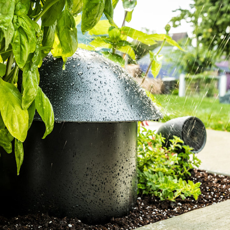 Magnelusa, SA Modern garden
