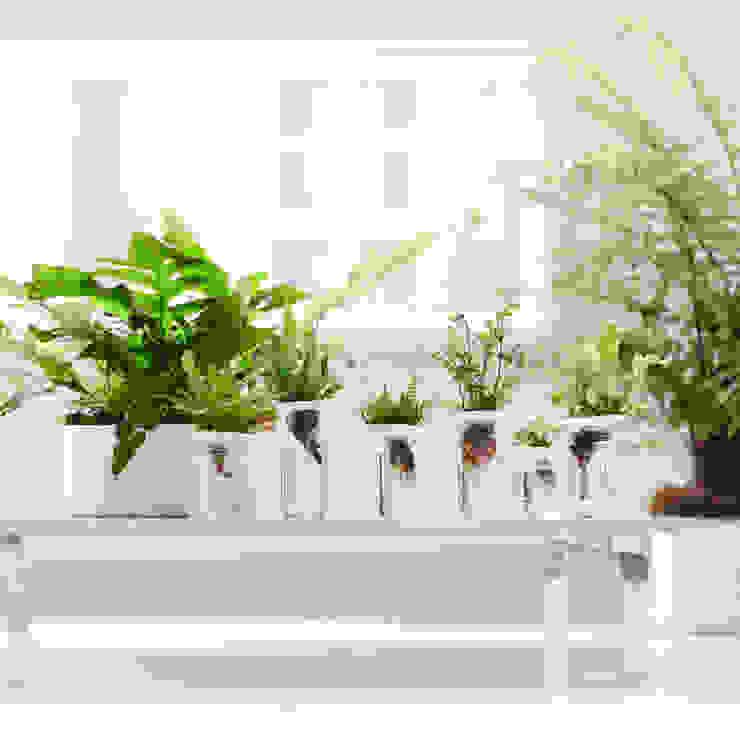 Weiße Töpfe umgarnen das satte Grün der Farne: modern  von Pflanzenfreude.de,Modern