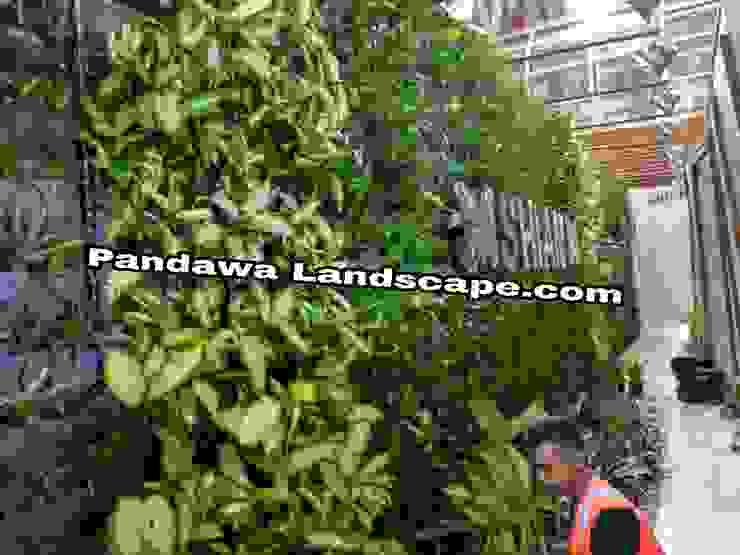 Vertical garden surabaya Oleh Pandawa Landscape Tropis
