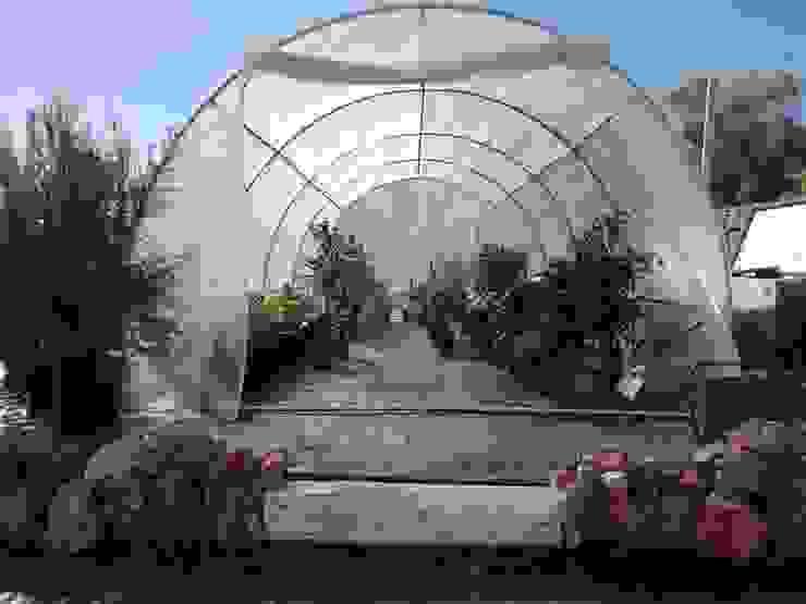 Piante da serra, palmizi e piante grasse EBF di Botti Edoardo Giardino classico