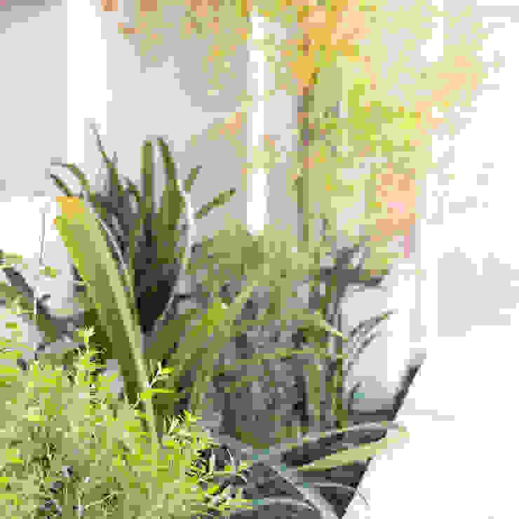 Jardins minimalistas por Estudio Amani Minimalista