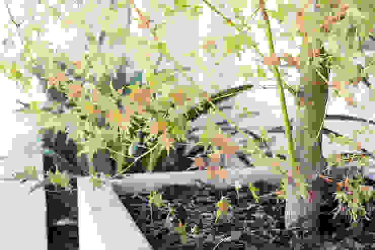 Detalle Jardines de estilo minimalista de Estudio Amani Minimalista