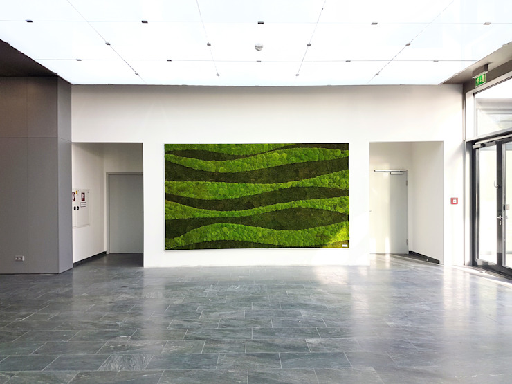 Waldkugelmoos AMMON Raumbegrünung Ausgefallene Geschäftsräume & Stores