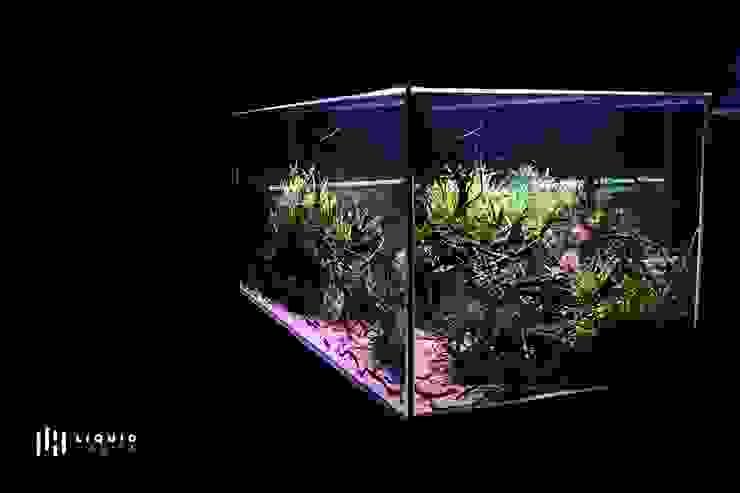 550L Freshwater Planted Aquarium Installation Liquid Habitat Salas de estilo moderno
