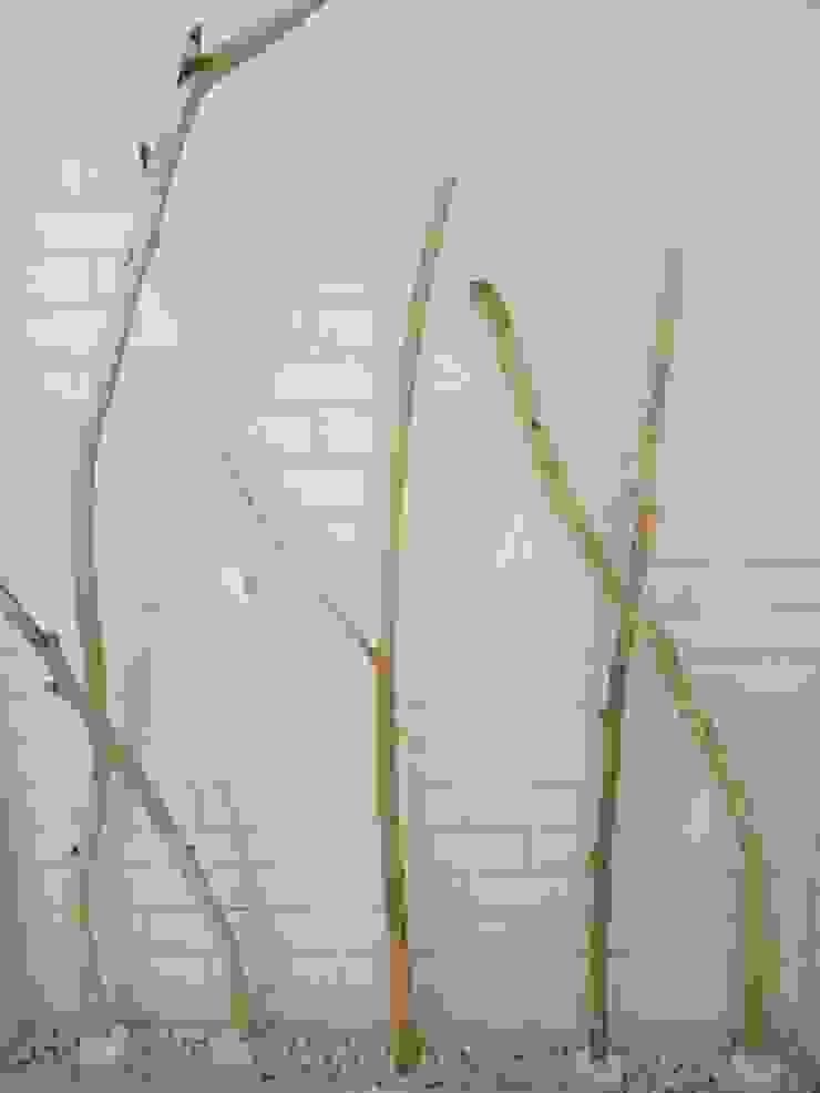 Jardines de invierno de estilo rústico de Tangerinas e Pêssegos - Design de Interiores & Decoração no Porto Rústico