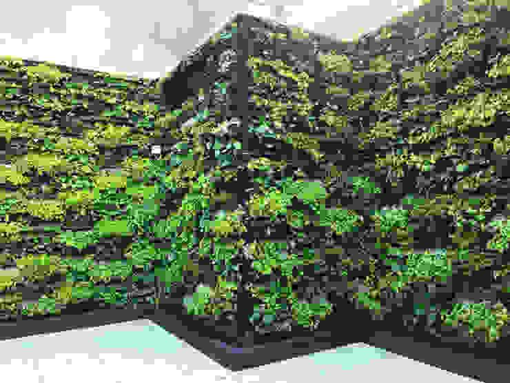Jardín Vertical con Sistema Cangurü: Jardines frontales de estilo  por Helecho SAS, Moderno