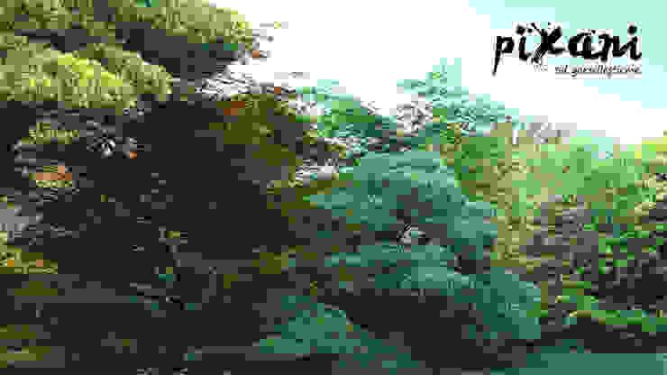 PIXANI STUDIOS