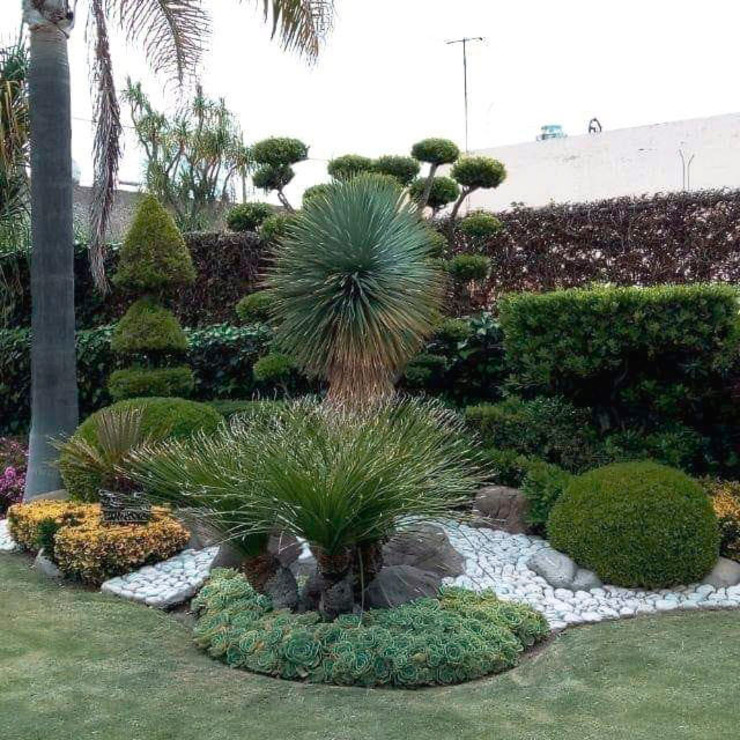 Isla de plantas en jardín Cattleya jardinería JardínPlantas y flores