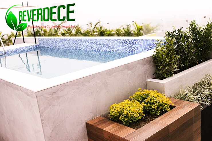 Plantas bordeando la piscina de REVERDECE PERU SAC Moderno