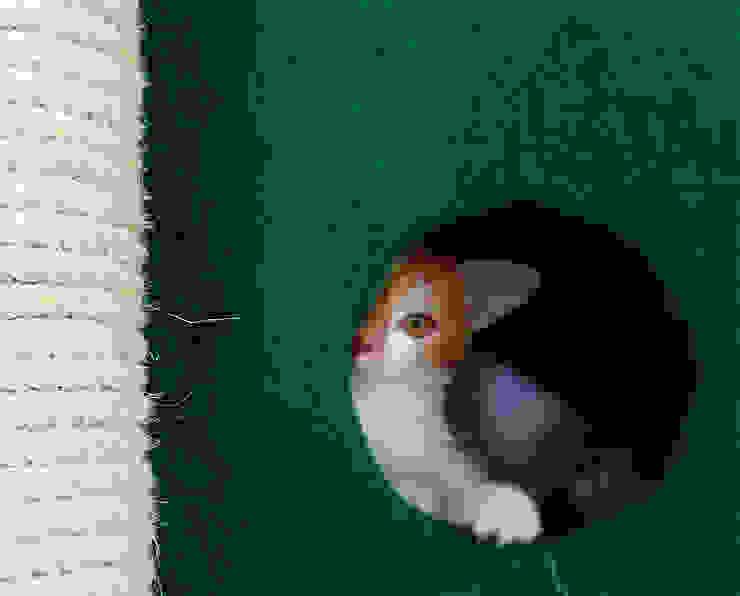 Gimnasio rascador para gatos, referencia Amazonas de ModuCat Estructuras modulares para gatos Moderno Madera Acabado en madera