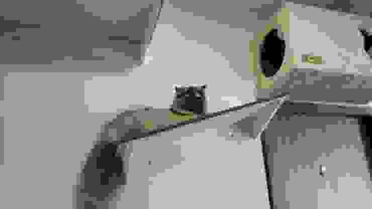 Adecuacion de espacios para gatos (Gatificacion) de ModuCat Estructuras modulares para gatos Moderno Madera Acabado en madera