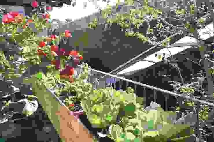 Horta Urbana Bendito Verde Paisagismo Jardins modernos