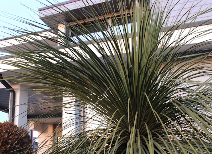 Piante verdi Giardino minimalista di viemme61 Minimalista