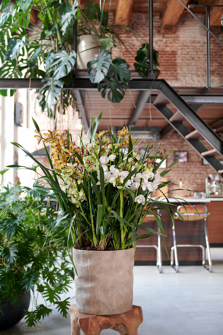 Pflanzenfreude.de 室內景觀 麻/黃麻 Multicolored