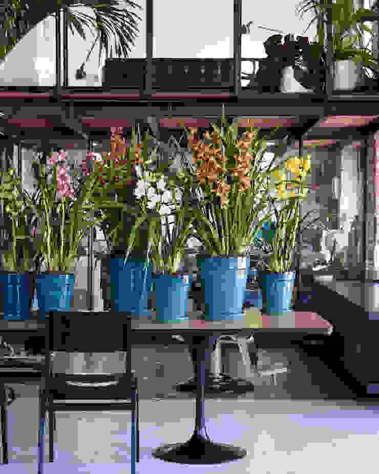Pflanzenfreude.de 室內景觀 金屬 Multicolored