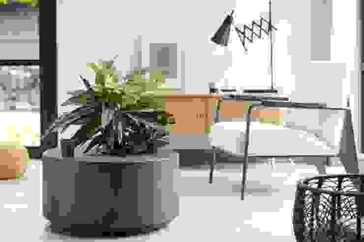 Pflanzenfreude.de 室內景觀 Grey