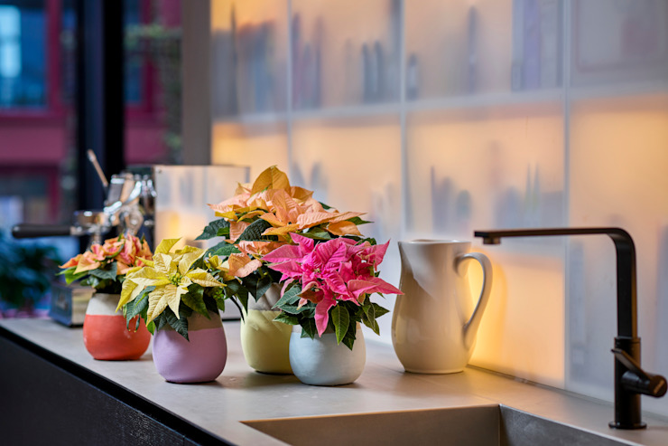 Pflanzenfreude.de 室內景觀 陶器 Multicolored