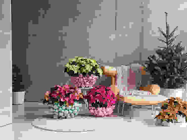 Farbenfrohe Poinsettien als Stimmungsheber in der kalten Jahreszeit Pflanzenfreude.de Raumbegrünung Plastik Mehrfarbig