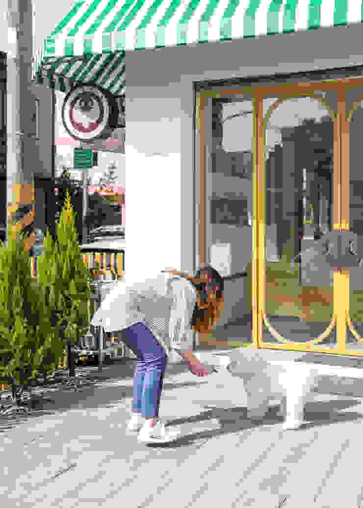 沐遇寵物沙龍 Mu Pet Salon | 前院 有隅空間規劃所 Commercial Spaces Wood Wood effect