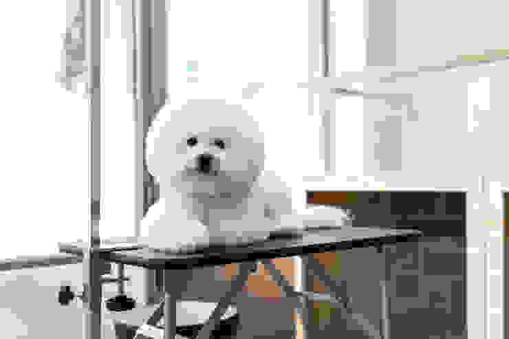 沐遇寵物沙龍 Mu Pet Salon | 修剪區 有隅空間規劃所 Commercial Spaces Wood White