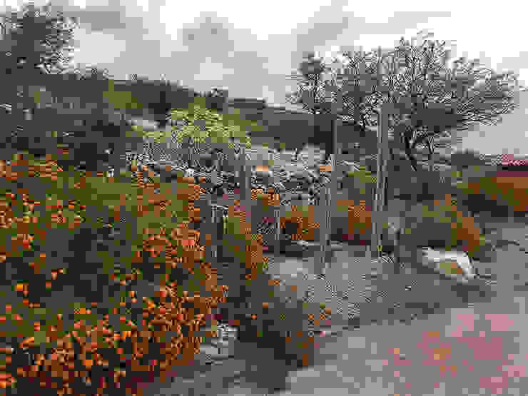 Hábitas สวนหิน หิน Orange