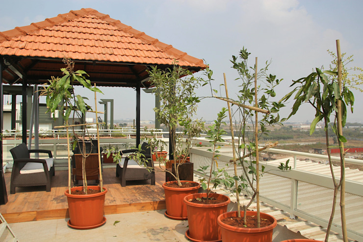 Fruit Trees in Terrace Interioforest Plantscaping Solutions Classic style balcony, porch & terrace