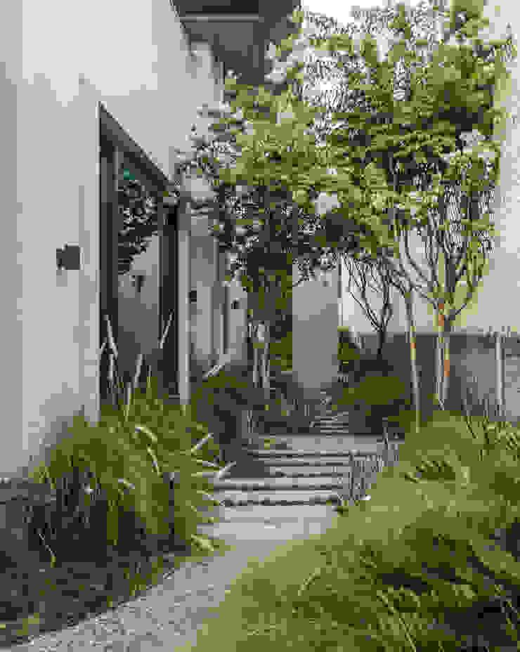 Naturaleza Canelo exteriores Jardines delanteros