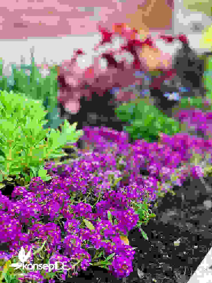 konseptDE FİDANLIĞI Modern Bahçe konseptDE Peyzaj Fidancılık Tic. Ltd. Şti. Modern