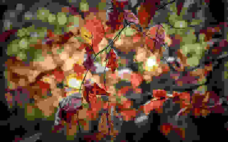 Nature Photography Photo Vobi