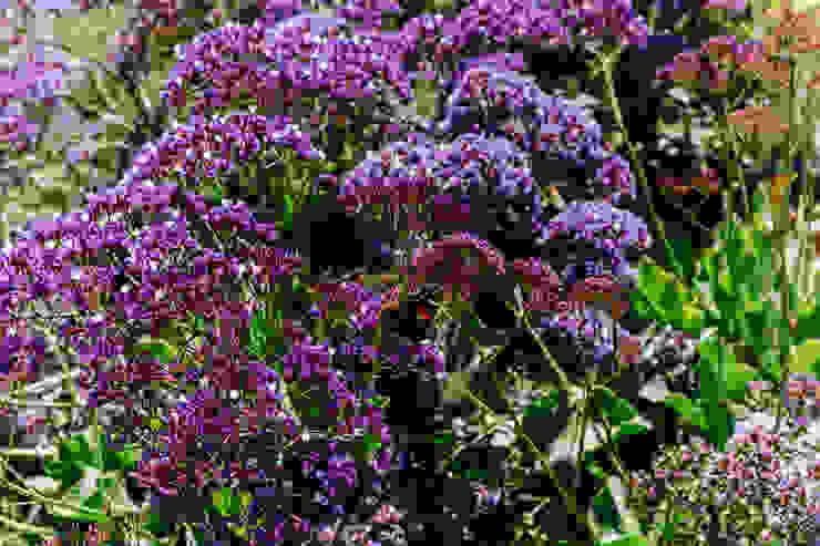 Simbiosi Estudi สวนต้นไม้และดอกไม้