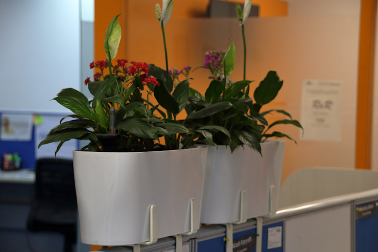 Eye level plants placed in cubicle divider Interioforest Plantscaping Solutions Classic style study/office
