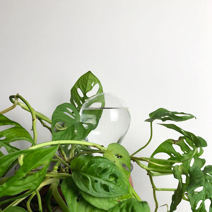 Waterworks / Keep your plants happy van House of Thol Scandinavisch Glas