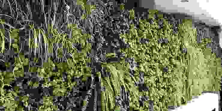 Jardines verticales Arquitectura Viva - Alexandra Patow Paredes y pisos de estilo tropical