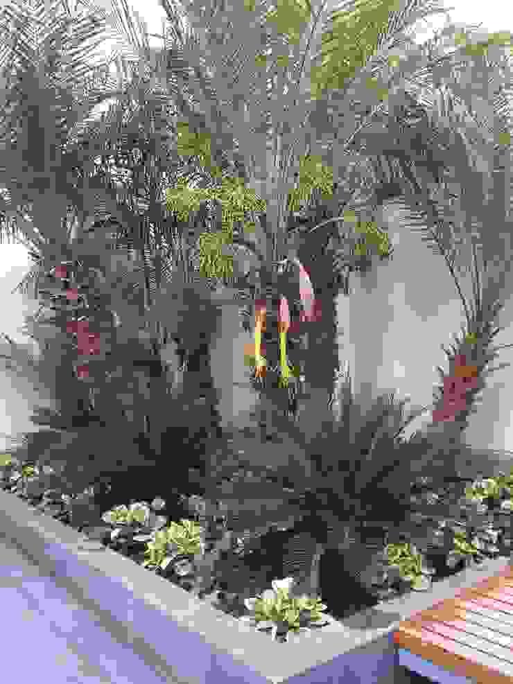 Jardinera Arquitectura Viva - Alexandra Patow Jardines de estilo tropical
