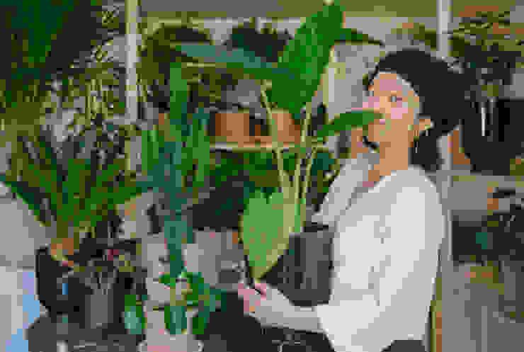 Plant decor office space Cuemars Ruang Komersial Tropis Green