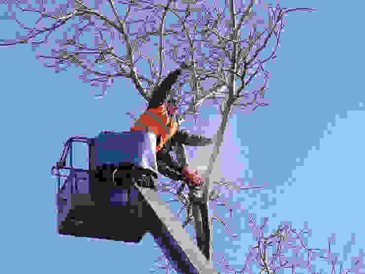 Pic Tree Service Stamford