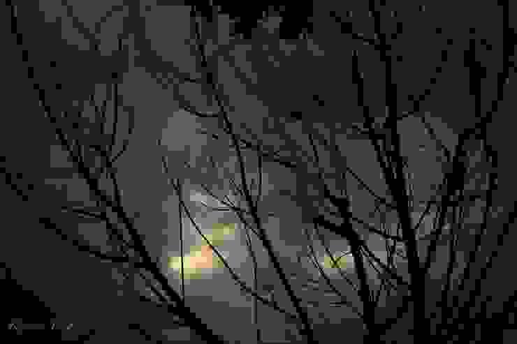 Atardecer en el Ajusco de Roberto Doger Fotografía Ecléctico