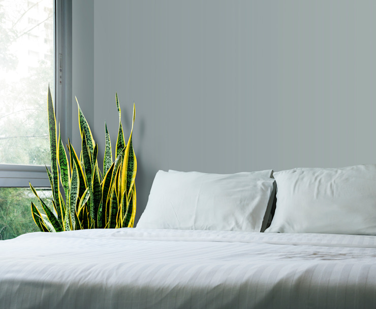 Snake Plant Interioforest Plantscaping Solutions Tropical style bedroom