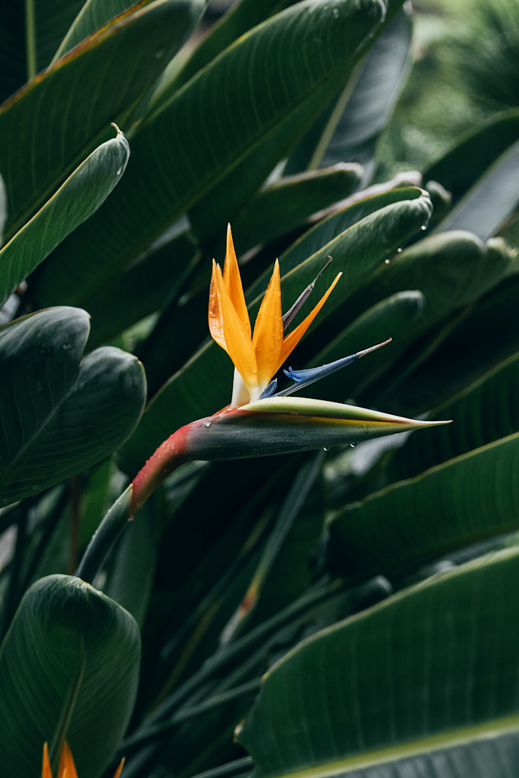 Interioforest Plantscaping Solutions Tropical style gardens