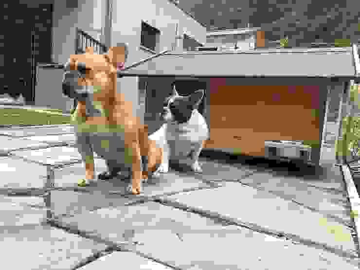 Cuccia da esterno ispirata a casa di Pet House Design® Moderno Legno Effetto legno