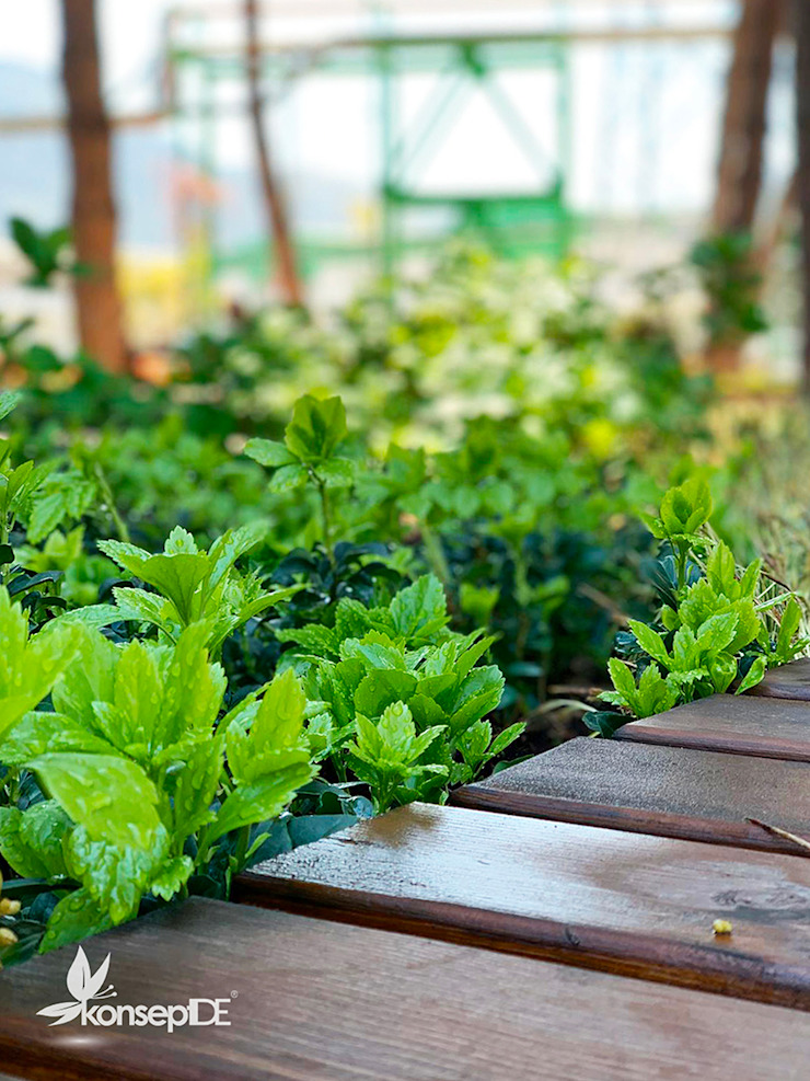 AKSA AKRİLİK KİMYA SANAYİ A.Ş & Ablok bahçesi Uygulama konseptDE Peyzaj Fidancılık Tic. Ltd. Şti. Ön avlu