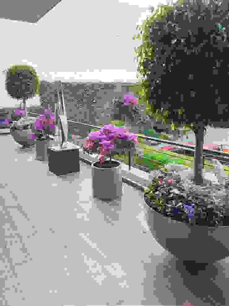 Jardineria bonaterra Garden Plants & flowers