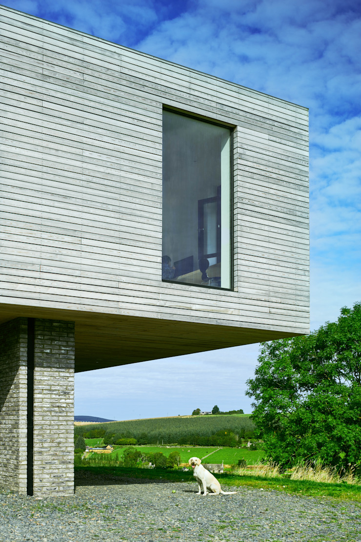 A happy dog Brown & Brown Architects Detached home