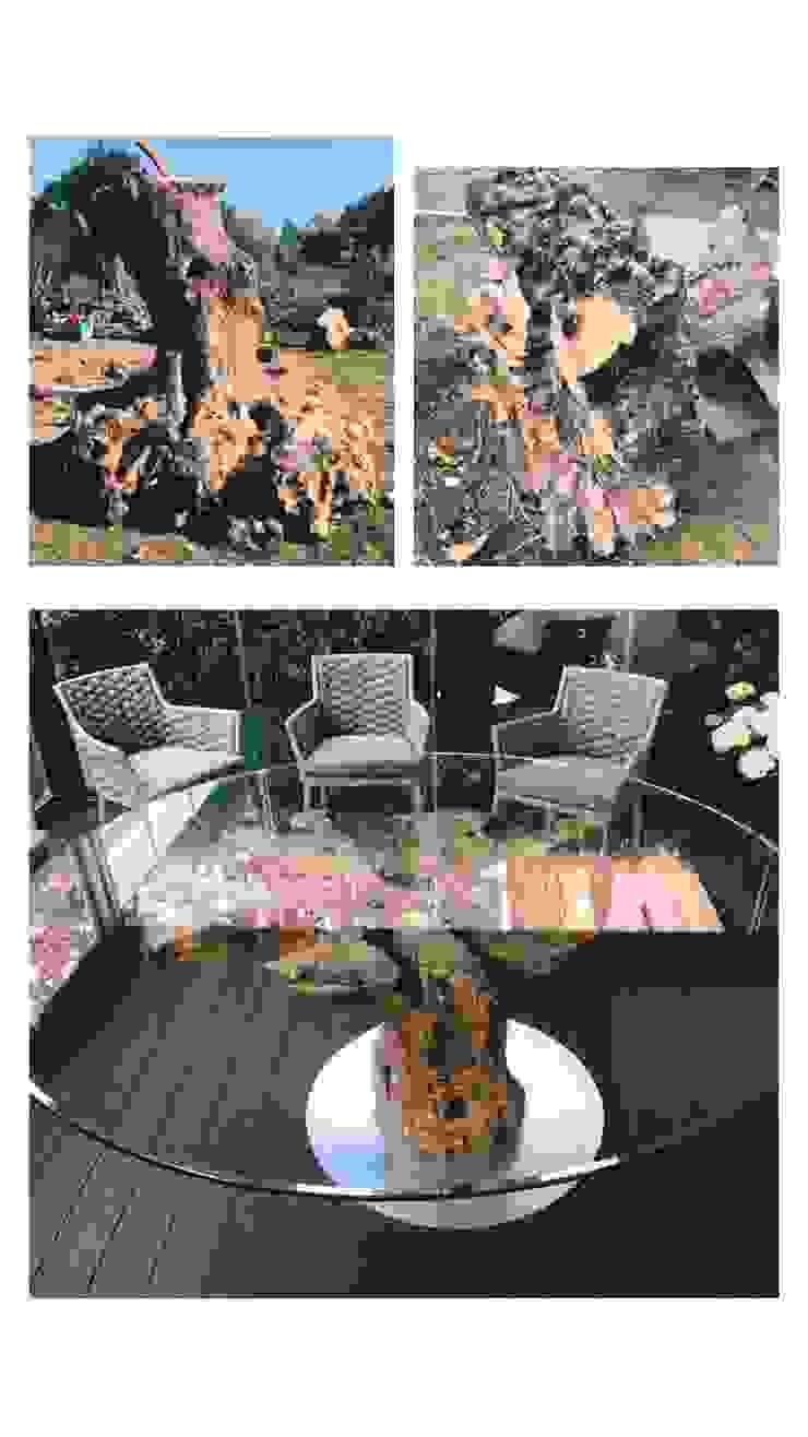Tavolo da pranzo in legno di ulivo Radice In Movimento Sala da pranzoTavoli